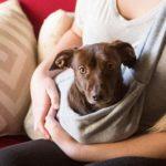 Dog Carrier Slings