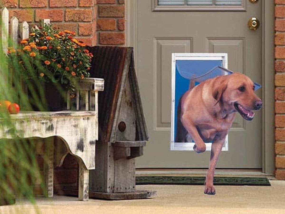 Best Dog Doors Of 2020 Review Guides Topsellersreview