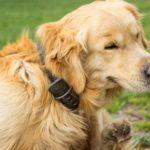 Dog Flea Collars