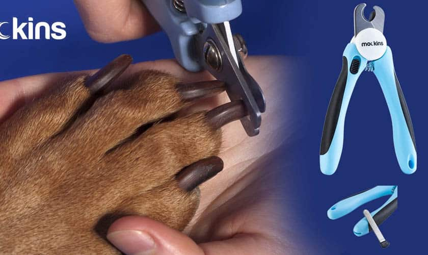 Wireless Electric Dog Fence Systems