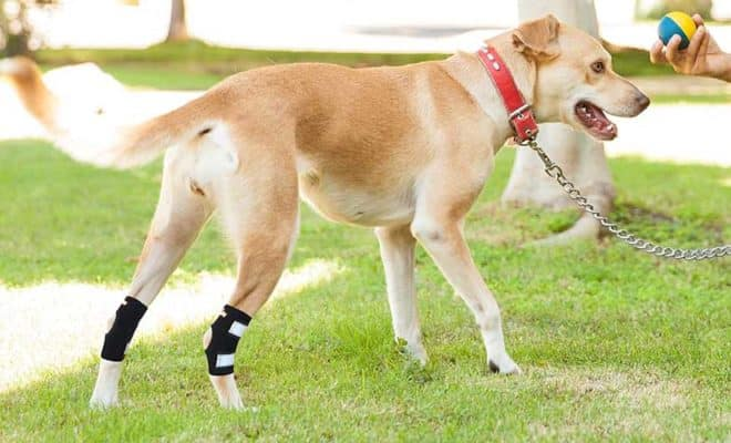 Dog Leg Braces