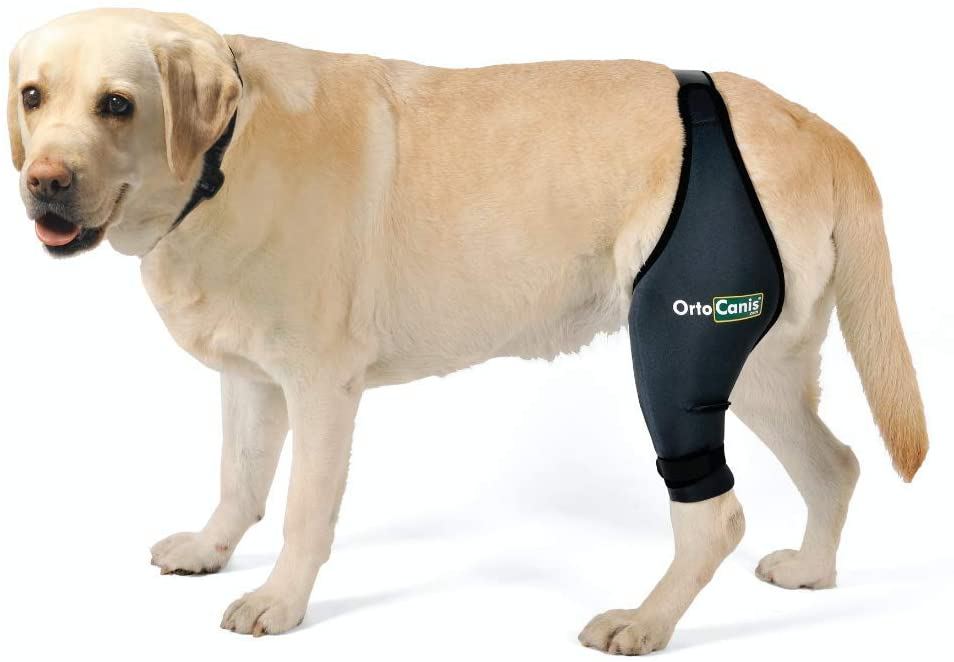 Ortocanis Original Knee Brace for Dogs