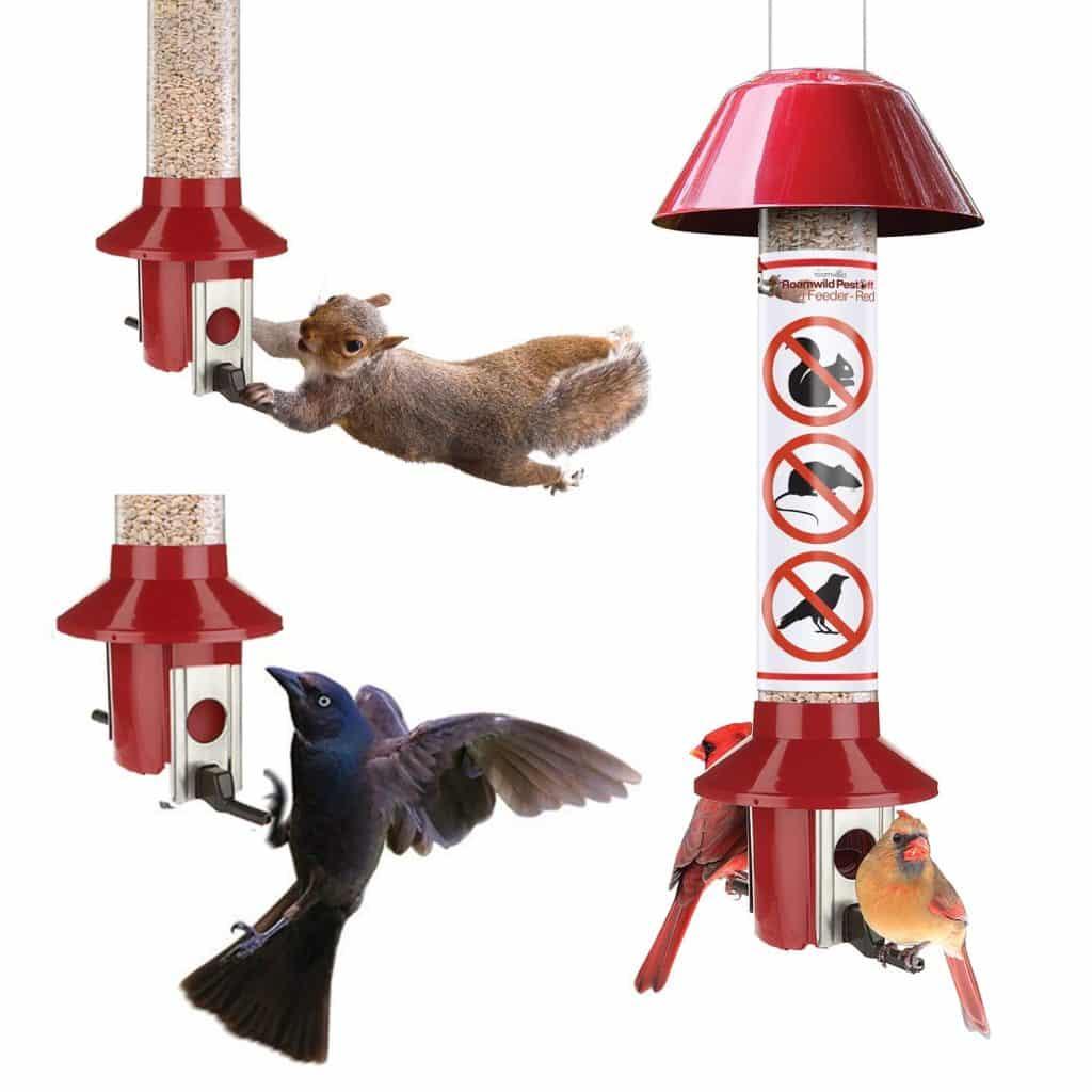 Roamwild Pesto Red Squirrel Proof Cardinal Bird Feeder